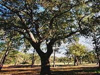 """Floresta portuguesa preocupa """"Os Verdes"""""""