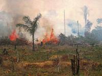 Amazônia Legal será o foco da Campanha da Fraternidade deste ano