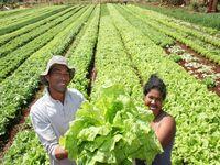 Governo brasileiro garante preços da agricultura familiar