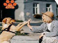 Associação italiana apresentará o relatório Animais na cidade. 35236.jpeg