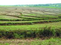 PEV contra revisão do regime de arrendamento rural