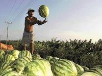Em 2009, safra de grãos deve atingir 136,4 milhões de toneladas