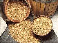 Rússia entrega 23.000 toneladas de trigo na Cuba