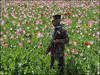 ONU adverte da situação de crise no Afeganistão