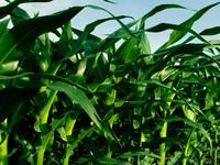 MCT lança editais para apoiar pesquisas com biocombustíveis