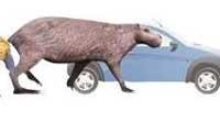 Uruguaios acharam os fósseis do roedor que pesava quase uma tonelada