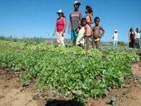 Agricultura familiar reforçará alimentação escolar