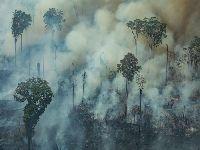 Órgãos de governo contradizem Bolsonaro e Salles sobre Fundo Amazônia e desmatamento. 34261.jpeg