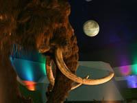 Material para clonar de mamute encontrado na Sibéria. 17277.jpeg