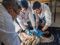 Cientistas Portugueses descobrem o maior polvo da Antártida. 26281.jpeg