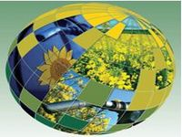 Produção de alimentos no Brasil não compete com biocombustíveis