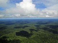 A Natureza não tem preço: capitalismo verde é neocolonialismo. 21286.jpeg