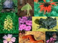 2010 é o Ano Internacional da Biodiversidade