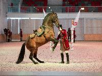 Escola Portuguesa de Arte Equestre estreia nova coreografia. 26290.jpeg