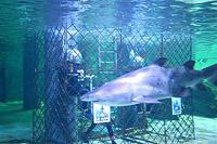 Mergulho com tubarões combate estresse