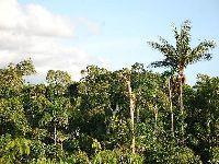 Estrela da Floresta começa actividades florestais em Ango. 25301.jpeg