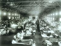 Gripe suína: Será esta a pandemia tão temida?