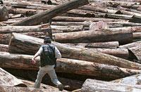 Governo quer reduzir desmatamento na Amazônia