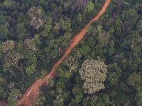 Deputados de Rondônia retiram proteção de mais de 200 mil hectares de florestas públicas. 35315.jpeg
