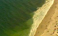 Praia da Copacabana contaminada com algas tóxicas
