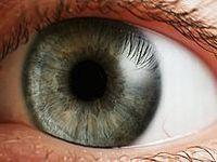 Visão pode causar atraso escolar, mostra pesquisa. 20352.jpeg