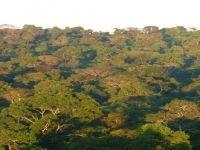 O papel do Brasil na agenda da conservação da biodiversidade. 22353.jpeg