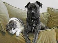 Brasil tem 74 milhões de animais domésticos. 22363.jpeg