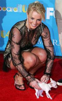 Britney Spears eleita a pior dona de cahorros