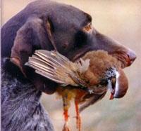 Homem baleado por seu cão
