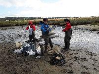 Alterações climáticas: cientistas estudam soluções para impedir o desaparecimento dos sapais estuarinos. 31368.jpeg
