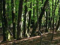 Brasil frustra as expectativas da Califórnia de compensar suas emissões com carbono florestal. 23369.jpeg