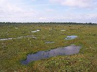 Verdes Saúdam Dia Mundial das Zonas Húmidas. 30372.jpeg