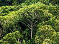 Bioma mais ameaçado do Brasil, Mata Atlântica vive alta do desmatamento. 33381.jpeg