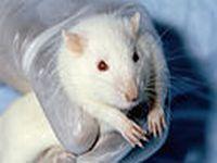 Grupos se unem para proibir testes de cosméticos em animais. 19382.jpeg