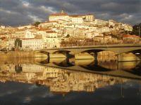 Coimbra: Teste pioneiro permite substituir teste em animais. 17385.jpeg