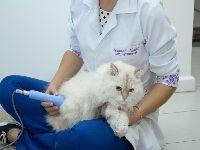 Fisioterapia Veterinária. 25388.jpeg