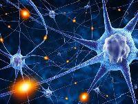 A estrutura do cérebro humano é semelhante à do universo. 34391.jpeg