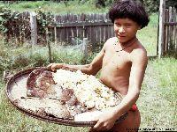 Pioneiro de pesquisa sobre cogumelos indígenas reencontra os Sanöma. 29397.jpeg