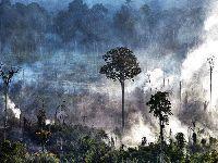 Aumento de desmatamento e queimadas deve piorar crise de Covid-19 no Xingu. 33400.jpeg
