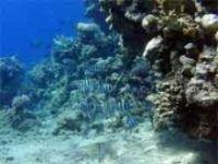 Brasil perdeu 80 por cento de seus arrecifes coralinos. 17410.jpeg