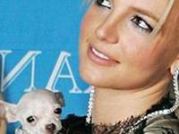Paris apoiou Britney depois de ela ser eleita a pior dona de cachorros
