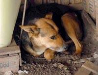 Cachorra salvou bebê recém nascido abandonado