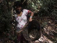 Tradição mineira com a potência do conhecimento Yanomami. 30418.jpeg