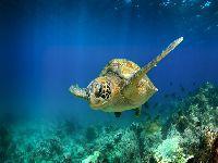 Equador com seminário virtual internacional sobre tartarugas marinhas. 33424.jpeg