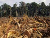 Dilma, Salve a Amazônia!. 15427.jpeg