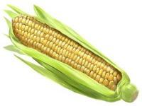 Programa Vendas em Balcão recebe mais 80 mil toneladas de milho