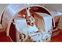 Lembra a Rússia os 50º aniversário do vôo espacial da cadela Laika