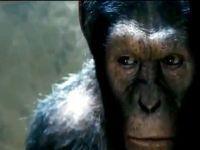 Ficção e realismo no Planeta dos Macacos. 15437.jpeg