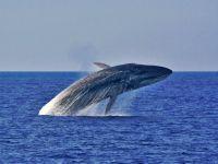 Baleias em Santa Catarina. 24437.jpeg