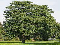 Os Verdes exigem esclarecimentos sobre o abate de árvores no Palacete Leitão. 29438.jpeg
